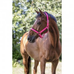 TRIORA LADIES POLO SHOW SHIRT KINGSLAND