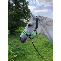 NAVY TAPIS ABSORB KENTUCKY